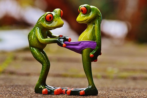 frogs-1158958__340